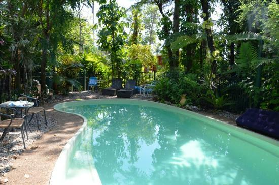 Rainforest Motel: Pool