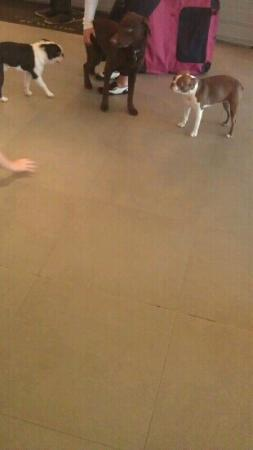Element Arundel Mills: Dogs in the main lobby.. You need to be a Pet person.