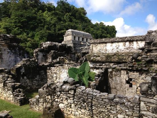 Hotel Xibalba: palenque ruins