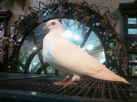 Joseph L. Popp, Jr. Butterfly Conservatory : A Dove in the Joseph L Popp Butterfly Conservatory