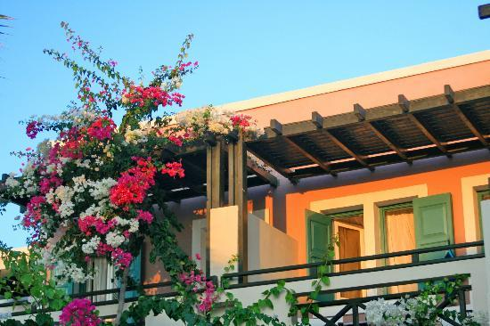 Rose Bay Hotel: Bougainvillea