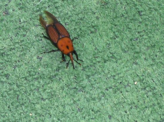 MH Antea: A bug found on the roof terrace of the hotel