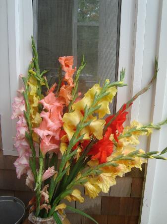Laurel's Bed and Breakfast : beautiful flower display