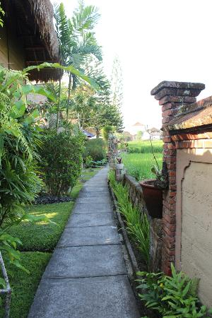 Tegal Sari: the path leading to the units and pool