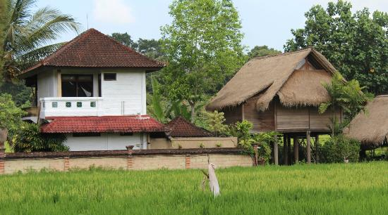 Tegal Sari: duplex room - the white one - from the road side
