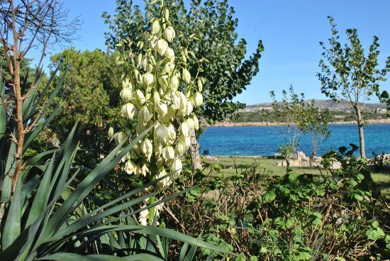 B&B Cala Peticchia: ottobre.  giardino fiorito