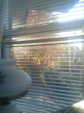 The Blue Spruce B&B: View from my room in the morning (Writer's Room)