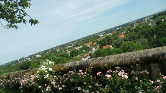 Dachau Palace and Court Garden: rose garden with a view