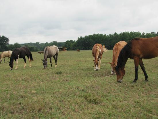 Southern Cross Ranch: So many horses to visit with in the pasture
