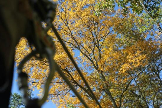 Navitat Canopy Adventures - Asheville Zipline: Wow! Nice fall view from a zipline