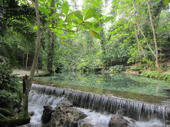 Blue Mountains Rainforests, Jamaica Tropical Forest