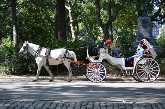 horse carriage picture of central park new york city tripadvisor. Black Bedroom Furniture Sets. Home Design Ideas