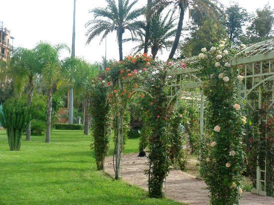 Jardin el Harti: Bougainvilliers
