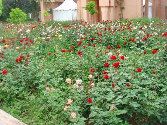 Roseraie picture of jardin el harti marrakech tripadvisor for Jardin kennedy