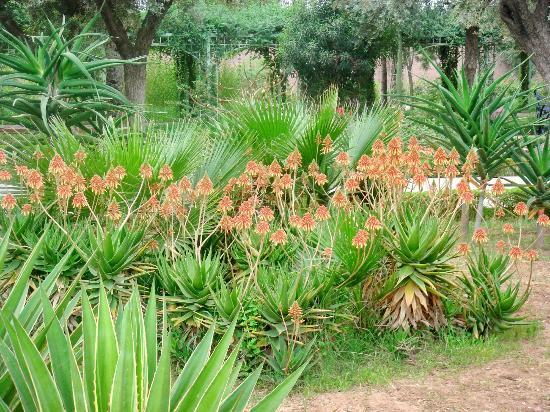 Jardin el Harti: Plantes vertes en fleur