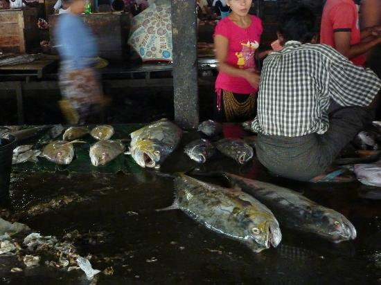Fish Market : Large Fish