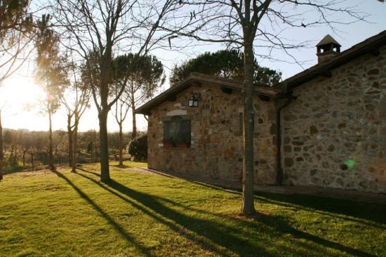 I Poggi Etruschi: poggi etruschi