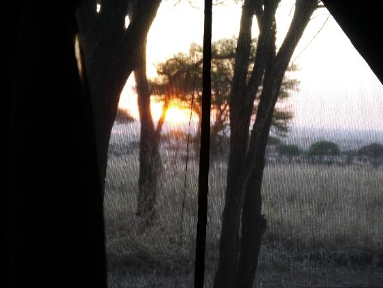 Dunia Camp, Serengeti: Good morning!
