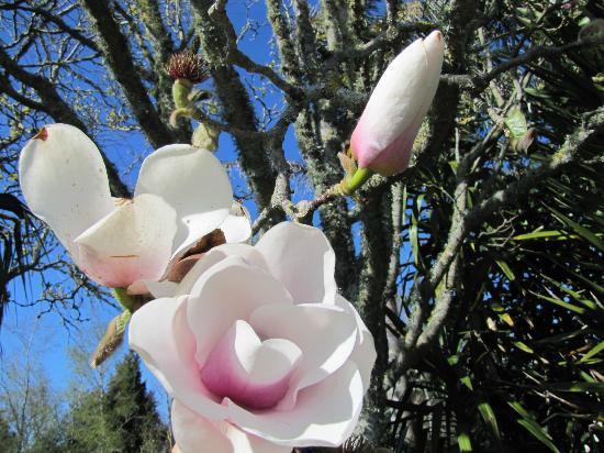 Blairgowrie House : Gardens