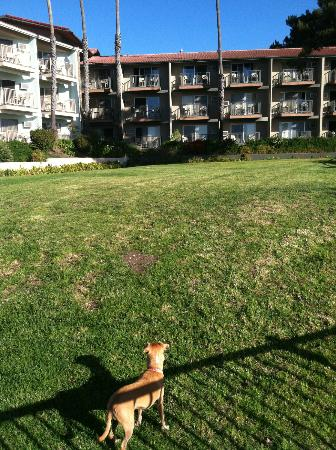 Shore Cliff Hotel: Our dog loved this grassey area