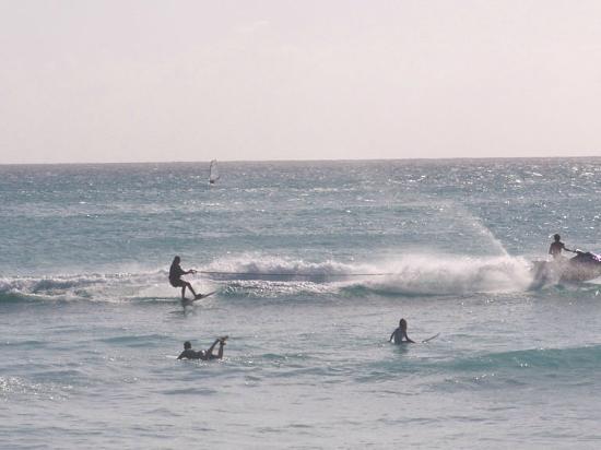 写真Dread or Dead Surf Shop枚