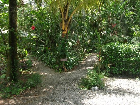 Pachamama Jungle River Lodge : Pathway from entrance