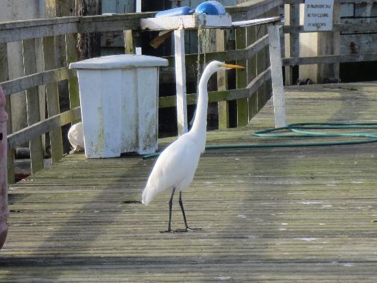 Bodega Bay Sailing: Some random bird on the dock before boarding.