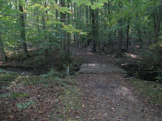 Jockey Hollow: Bridge on Hiking Trail