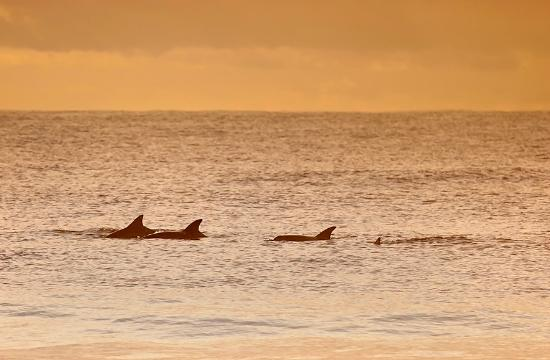 Mollymook Shores: Dolphins on Mollymook beach