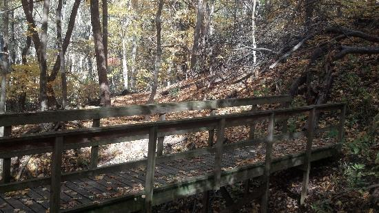 Savanna, IL: Bridge on the Sunset Trail over a dried up stream. Fall beauty!