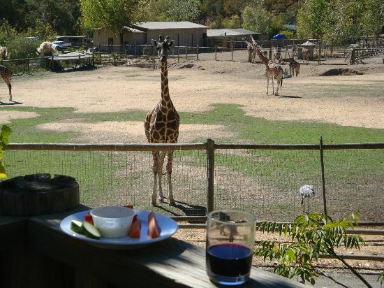 Safari West 사진
