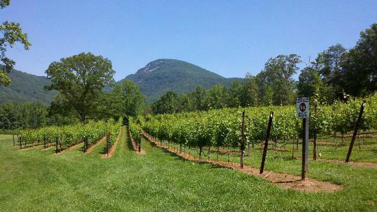 ‪Yonah Mountain Vineyards‬