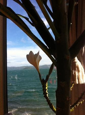 Days Bay Homestay: Blooming Frangipani in the Crows Nest