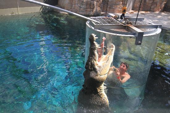 99133231301 Crocosaurus Cove, Darwin: Hours, Address, Crocosaurus Cove Reviews: 4/5