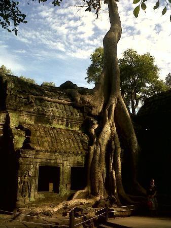 Angkor Wat: candi berpohon,