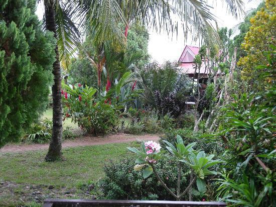 Arlen Nova's Paradise Guesthouse: The garden