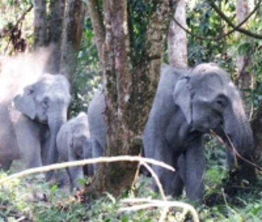 Nameri Eco Camp: Wild elephants crossing