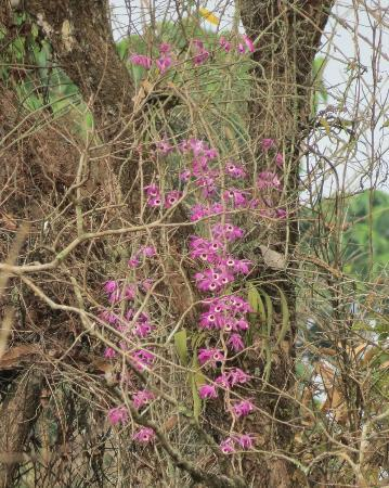 Nameri Eco Camp: Wild orchids