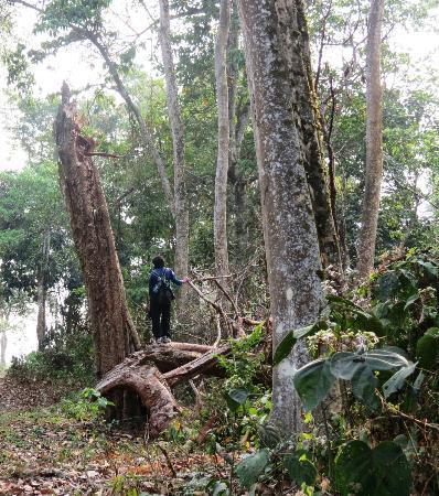 Nameri Eco Camp: forest
