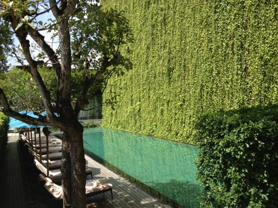 137 Pillars House: beautiful green wall next to the pool