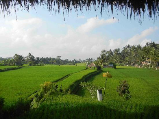 Mathis Retreat : The wonderful view over the rice fields from the dining room