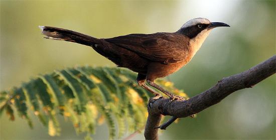 Parry Creek Farm Tourist Resort and Caravan Park: Great birding