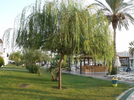 Zorbas Beach Hotel: pool bar