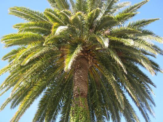 Mas des Kardouons : palm tree of the b&b.jpg