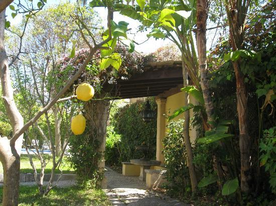Hotel Salvia: garden has real lemon and orange trees