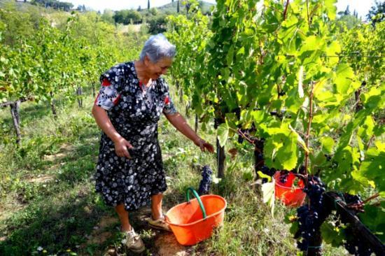 Agriturismo Poggiacolle: Harvest