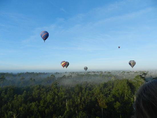 Orlando Balloon Rides : Balloons soaring
