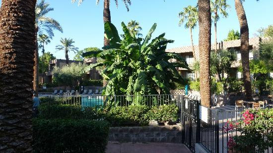 DoubleTree Resort by Hilton Paradise Valley - Scottsdale: Pool area.