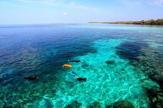 Wakatobi Dive Resort: Snorkeling off the beach at Wakatobi.