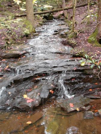 Grundy Forest Natural Area: School House creek below falls